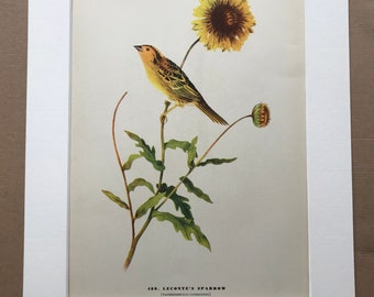 1937 Leconte's Sparrow Original Vintage Audubon Print - Mounted and Matted - Available Framed - Bird Art - Ornithology