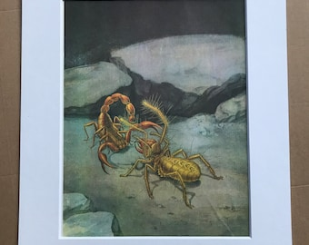 1984 Scorpion and Sun Spider Original Vintage Print - Insect Art - Spider - Mounted and Matted - Available Framed