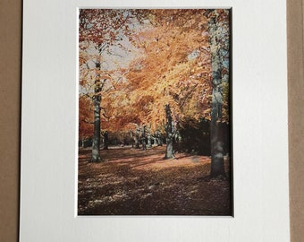 1940s Beech Trees in Autumn Original Vintage Print - Mounted and Matted - Tree - Botanical Decor - Available Framed