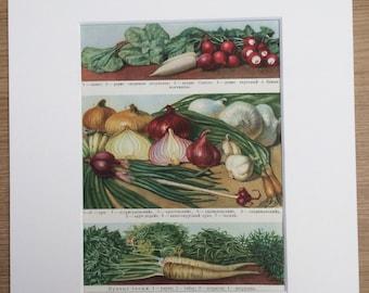 1959 Vegetables Original Vintage Print - Mounted and Matted - Retro Wall Art - Kitchen Decor - Cooking - Onion - Radish - Garlic