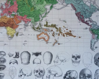 1870 Ethnography World Map and Skull Comparison Large Original Antique Engraved Illustration - Anthropology