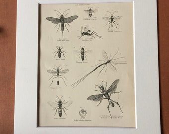 1862 Hymenoptera Original Antique Engraving - Available Mounted, Matted and Framed - Spider Wasp Ichneumon Cockroach Fly - Entomology