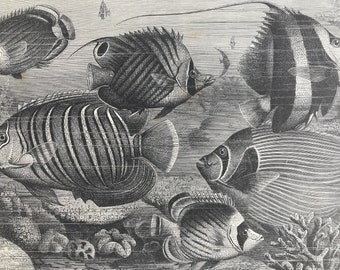1893 Group of Scaly-Finned Fishes Original Antique Print - Marine Species - Fish - Ocean Life - Mounted and Matted - Available Framed
