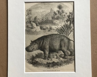 c.1860 Original Antique Print - Female Hippopotamus and Young - Wildlife - Natural History - Mounted and Matted - Available Framed