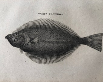 1812 Whiff Flounder Original Antique Engraving - Ichthyology - Fish Art - Fishing Cabin Decor - Available Framed