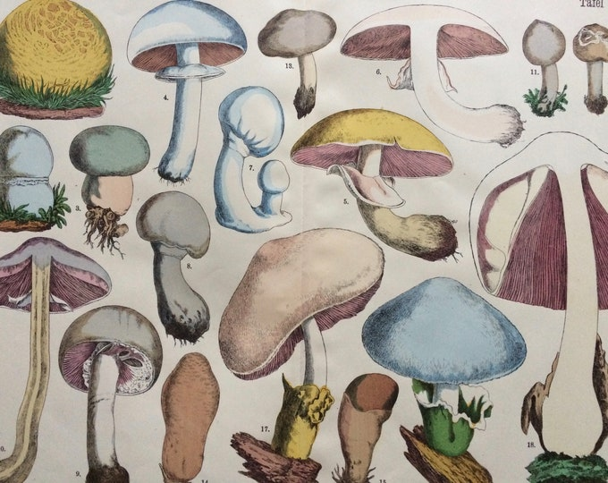 Featured listing image: 1890 Large Original Antique Fungi Lithograph - Mushroom -  Botany - Botanical Art - Wall Decor - Kitchen Decor - Agaric