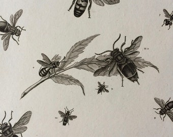 1819 Wasp Varieties Original Antique Engraving - Available Mounted and Matted - Hymenoptera - Insect - Entomology - Framed
