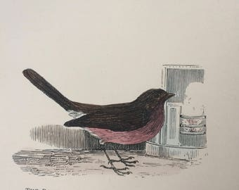 1907 The Robin or Redbreast Original Antique Matted Hand-Coloured Engraving - Ornithology - Bird Decor - Wildlife - Decorative Art