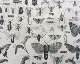 1904 Entomology Original Antique Print - 10 x 12 inches - Insects - Moth - Butterfly - Beetle -Wall Decor - Victorian Art