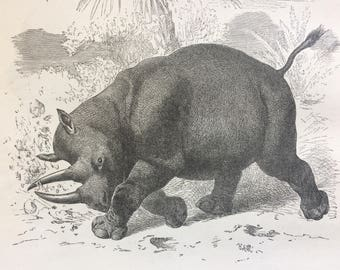 1892 Keitloa Original Antique Engraving - Wildlife - Wall Decor - Available Framed - 8 x 10 inches - Black Rhinoceros - Zoology