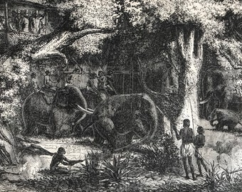 c.1860 Elephant Hunting in Ceylon Original Antique Print - Wildlife Decor - Animal Art - Sri Lanka - Mounted and Matted - Available Framed