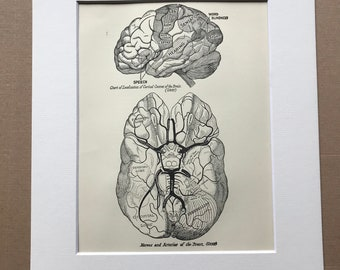 1927 Nerves and Arteries of the Brain Original Vintage Print - Mounted and Matted - Medical Decor - Scientific Decor - Available Framed