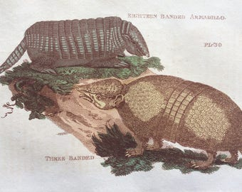 1811 Original Antique Hand-Coloured Engraving - Eighteen and Three Banded Armadillo - Wildlife - Wall Decor - Zoology - Decorative Art
