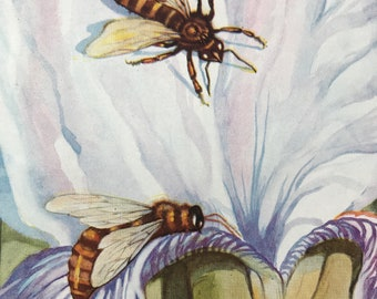 1940s Worker Bees seeking Nectar and Pollen Original Vintage Print - Mounted and Matted - Beekeeping - Honeybee - Apis - Available Framed