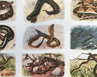 1924 Snakes Original Antique Lithograph - Mounted and Matted - Puff Adder, Green Anaconda, Sea Krait, Coral Snake, Cobra - Available Framed