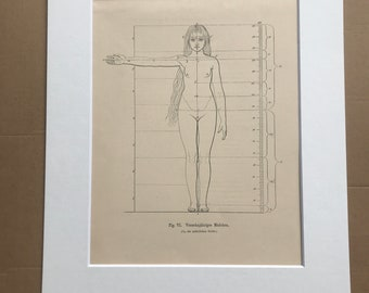 1890 Original Antique Anatomical Print - Dimensions of the Body - Anatomy - Medical Decor - Mounted and Matted - Available Framed