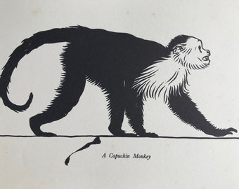 1937 Capuchin Monkey Original Vintage Print - Mounted and Matted - Available Framed - Monkey - Primate - Natural History - Zoology