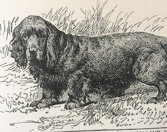 1900 Black Spaniel Original Vintage Dog Illustration - Animal Art - Dog Drawing - Decorative Wall Art - Matted - Framed - Gift Idea