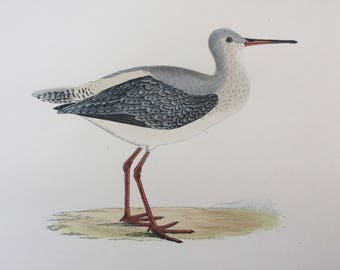 1903 Spotted Redshank Original Antique Matted Hand-Coloured Engraving - Ornithology - Available Framed - Wildlife - Decorative Art