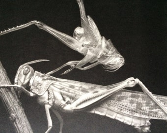 Insects, Entomology