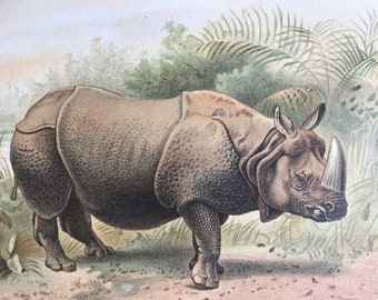 1893 Rhinoceros Original Antique Print - Wildlife - Natural History - Animal Art - Mounted and Matted - Available Framed