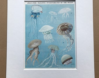 1940s Jellyfish Original Vintage Print - Mounted and Matted - Vintage Fish Art - Marine Wildlife - Ocean Decor - Available Framed