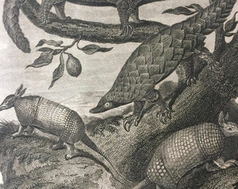 1819 Manis and Armadillo Original Antique Engraving - Available Mounted and Matted - Mammal - Wildlife Decor - Framed