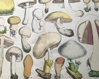 1880 Large Original Antique Fungi Lithograph - Mushroom -  Botany - Botanical Art - Wall Decor - Kitchen Decor - Agaric