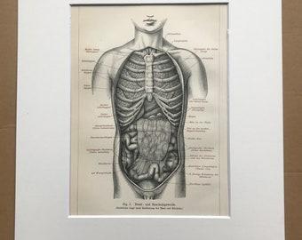 1895 Internal Organs Original Antique Print - Mounted and Matted - Anatomy - Anatomical Art - Vintage Wall Decor