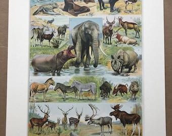 1931 Mammals Original Antique Print - Elk, Moose, Elephamt, Seal, Tapir, Rhino, Zebra, Deer, Hippo - Mounted and Matted - Available Framed