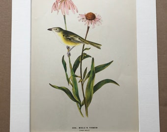 1937 Bell's Vireo Original Vintage Audubon Print - Mounted and Matted - Available Framed - Bird Art - Ornithology