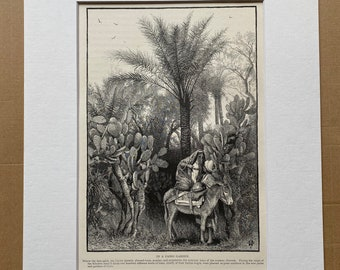 1880 In a Cairo Garden Original Antique Engraving - Egypt - Mounted and Matted - Available Framed
