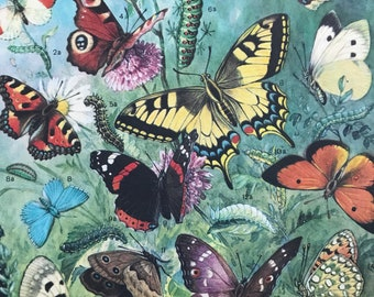 1984 European Day Butterflies Original Vintage Print - Butterfly - Entomology - Insect Art - Mounted and Matted - Available Framed