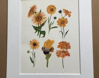 1924 Original Vintage Botanical Print - Iris, Fleabane, Sneezewort - Flower - Garden - Horticulture - Mounted and Matted - Available Framed