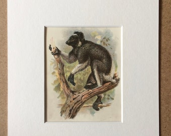 1896 Endrina Lemur Original Antique Chromolithograph - Wildlife - Natural History - Mounted and Matted - Available Framed