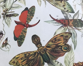 1984 Tropical Cicadas Original Vintage Print - Insect Art - Mounted and Matted - Available Framed