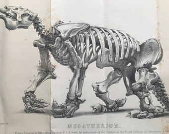 1858 Original Antique Engraving - Megatherium - Palaeontology - Fossil - Available Matted and Framed