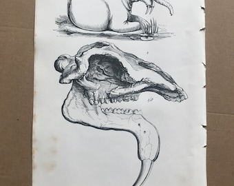 1858 Original Antique Engraving - Restoration of Dinotherium Gigantium - Geology - Fossil - Palaeontology