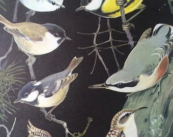 1968 Original Vintage Bird Print - Eurasian Blue Tit, Great Tit, Coal Tit - Mounted and Matted - Available Framed - Wildlife - Ornithology