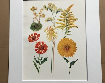 1924 Original Vintage Botanical Print - Flower Colour Planning - Garden - Horticulture - Mounted and Matted - Available Framed