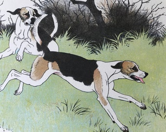 1950 Foxhounds Original Vintage Illustration - Maurice Wilson - Animal Art - Dog Drawing - Mounted and Matted - Available Framed