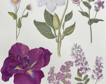 1924 Original Vintage Botanical Print - Fleabane, Bellflower - Flower - Garden - Horticulture - Mounted and Matted - Available Framed