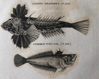 1812 Serdid Dragonet and Common Weever Original Antique Engraving - Ichthyology - Fish Art - Fishing Cabin Decor - Available Framed