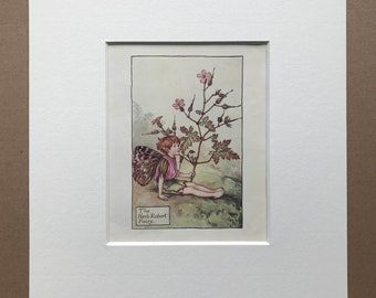 1936 The Herb Robert Fairy Original Vintage Print - Flower Fairy - Cicely Mary Barker - Mounted and Matted - Available Framed