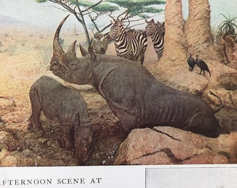 1940s Afternoon Scene at an African Water-Hole Original Vintage Print - Wildlife - Natural History - Mounted and Matted - Available Framed