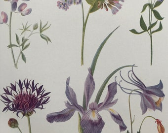 1924 Original Vintage Botanical Print - Comfrey, Centaury, Iris, Columbine - Garden - Horticulture - Mounted and Matted - Available Framed