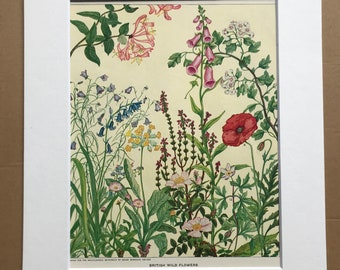 1951 British Wild Flowers Original Vintage Print - Botanical Decor - Daisy, Foxglove, Honeysuckle - Mounted and Matted - Available Framed