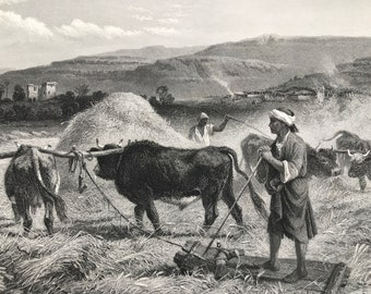 1880 Threshing Corn Original Antique Engraving - Palestine - Agriculture - Farming - Mounted and Matted - Available Framed