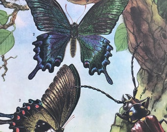1984 Far Eastern Insects Original Vintage Print - Butterfly - Entomology - Insect Art - Mounted and Matted - Available Framed
