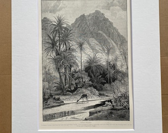 1880 Wady Feiran Original Antique Engraving - Egypt - Mounted and Matted - Available Framed